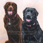 Cassie and Isla, Labradors