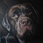 Logie, Chocolate Labrador