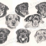 Rottweilers and Border Terriers