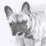 Jeff, French Bulldog