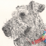 Molly, Airedale