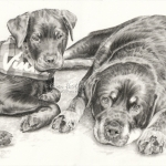 Dog pencil portrait. Rottweilers, Vinnie and Roxie