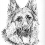 Axel, German Shepherd