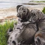 Bruce and Max, Black Labradors