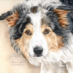 Chase, Border Collie