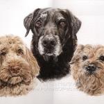 Coco (Cockerpoo), Harvey (Labrador) and Bertie (Border Terrier)