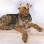 Frankie, Airedale