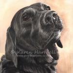 Jet, Black Labrador