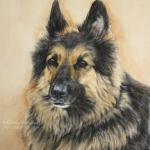 Joey, German Shepherd cross
