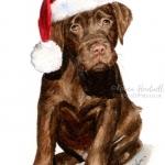 Logie, Chocolate Labrador Puppy