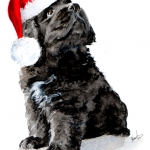 Max, Newfoundland Puppy