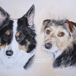 Megan, Border Collie, and Baxter, Border Terrier