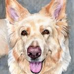 Roxy, German Shepherd