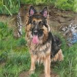 Shadow, German Shepherd