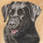 Dog painting. Ziva, Black Labrador