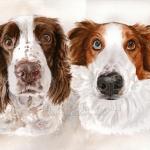 Bindi and AJ. Watercolour