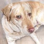 Carly, Yellow Labrador