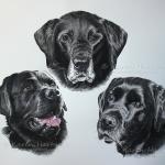 Black Labradors: Macduff, Corrie, Rouble. Watercolour