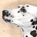 Molly, Dalmatian