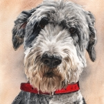 Pancho, Otterhound