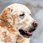 Sherpa, Yellow Labrador