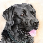 Woody, Black Labrador