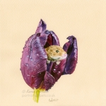 Harvest Mouse in a Tulip