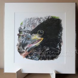 White-tailed Eagle Chick print