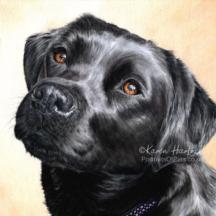 Black Labrador watercolour - Breagha