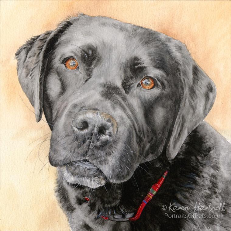 Black Labrador painting - Kara