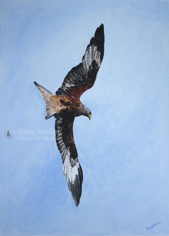 Red Kite painting