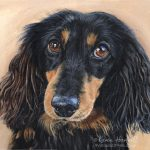 Harry, Long-haired Dachshund