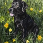 Morty, Black Labrador. Watercolour