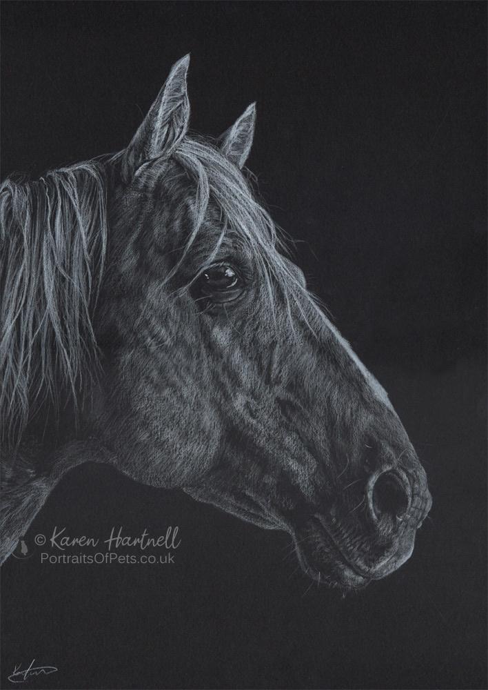 American Quarter Horse portrait