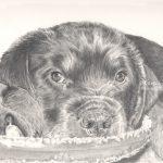 Roxie, Rottweiler puppy