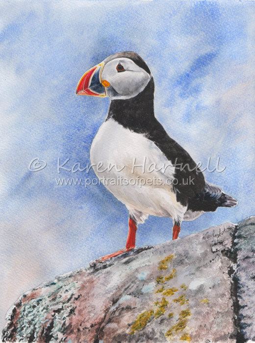 Puffin, watercolour