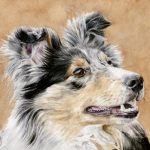 Zazou, Sheltie. Watercolour
