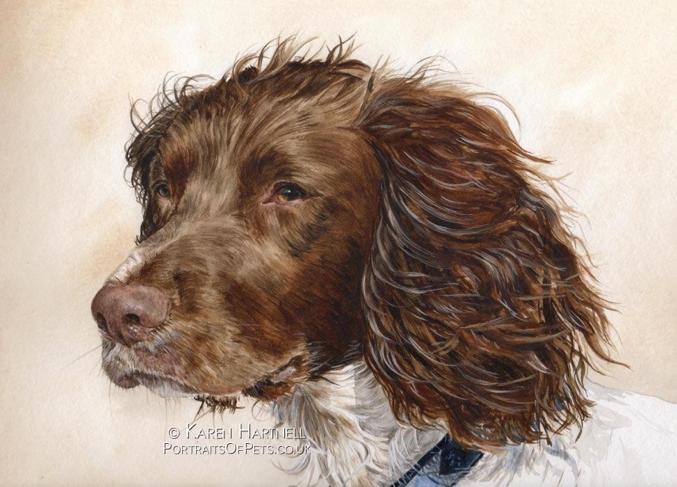 Rigby, Springer Spaniel painting
