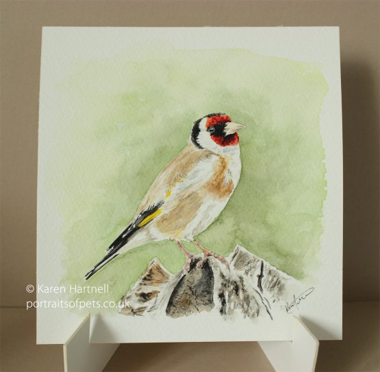 Goldfinch, watercolour