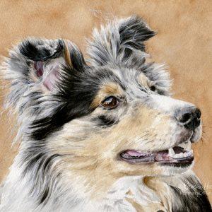 Zazou, Sheltie, watercolour dog painting