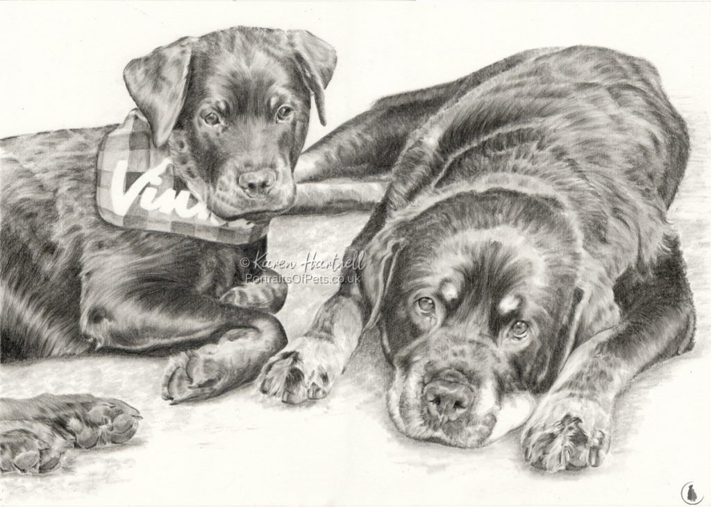 Rottweilers, Vinnie and Roxie. Graphite pencil