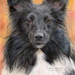Zuzu, Sheltie, Watercolour