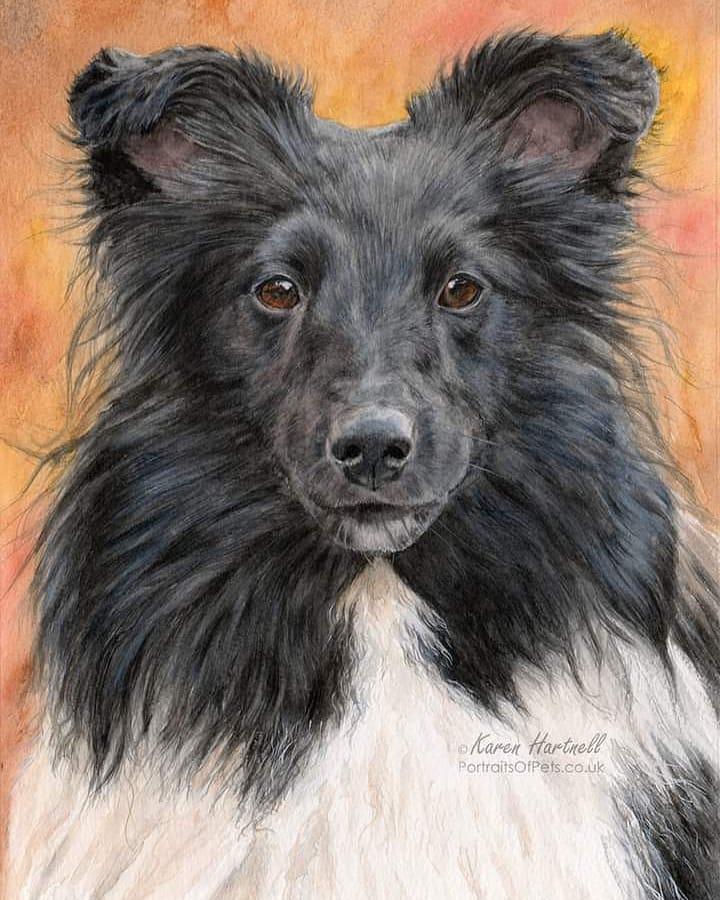 Zuzu, Sheltie, Watercolour