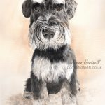 Brodie, Miniature Schnauzer, watercolour