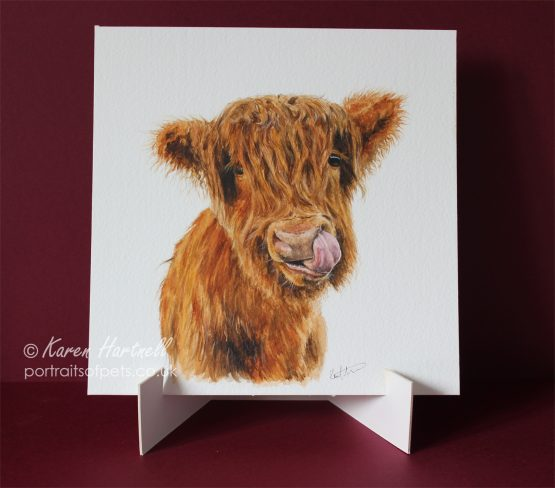 Young Highland Cow