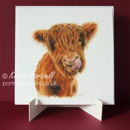 Young Highland Cow, print