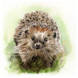 A Happy Hedgehog, watercolour